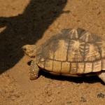 tortoise-250675_1280