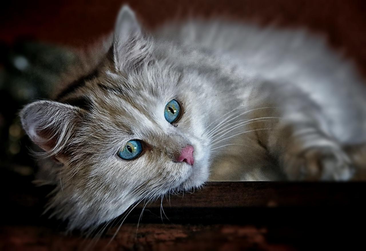 cat-1146504_1280